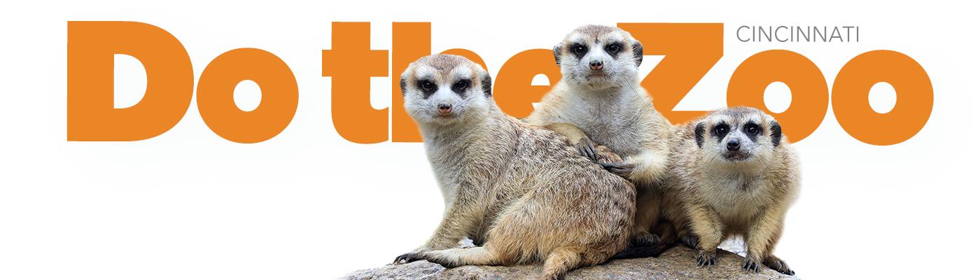 Do the Zoo meerkats