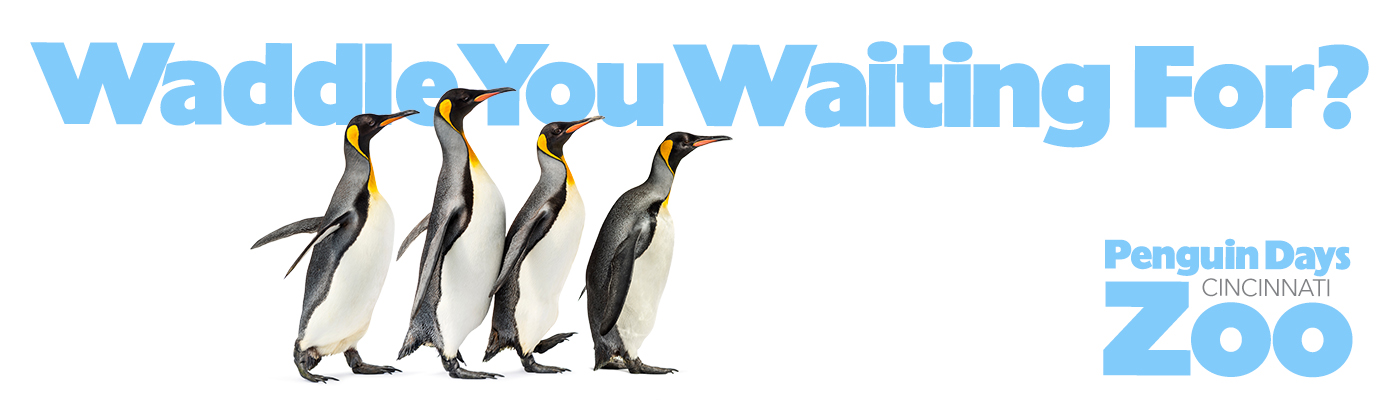 Waddle You Waiting For